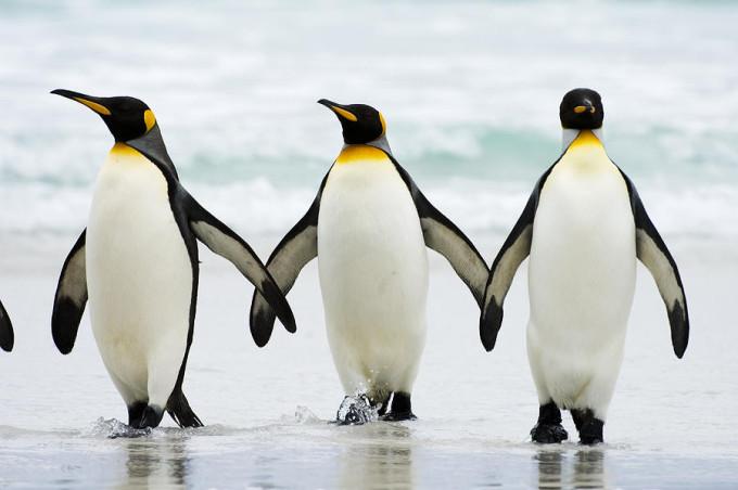 penguin-08