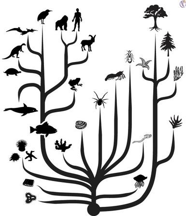 生物 分類