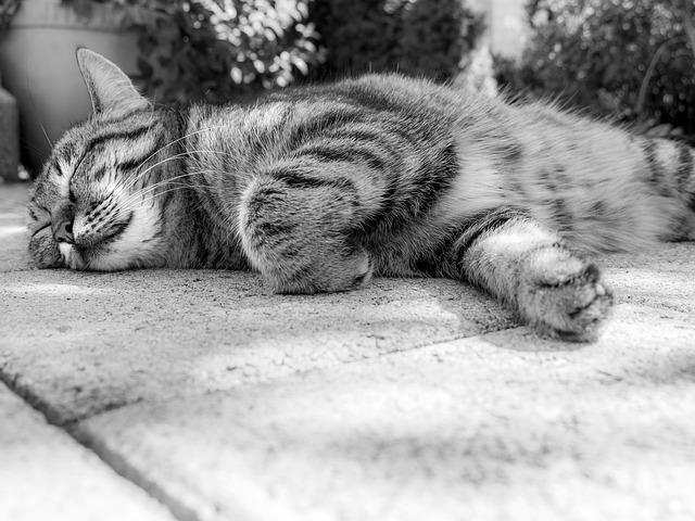 cat-181607_640