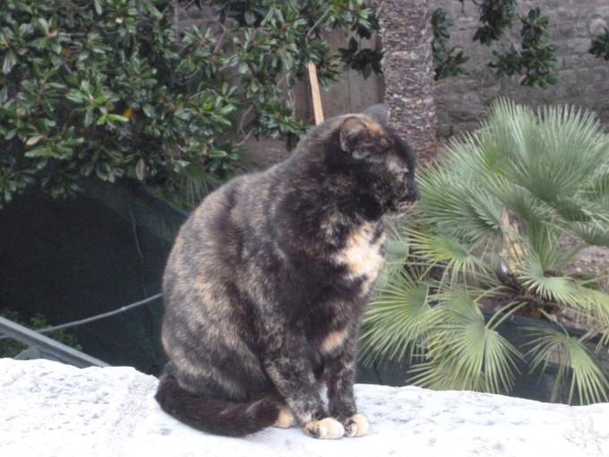 ドブロヴニクには黒猫がいっぱい、ジジだ!