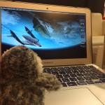 海外旅行&世界一周ブロガー必見!今あるブログで稼ぎながら旅する方法!