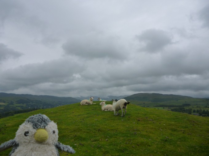 羊いいい!でもイギリスは毎日天気が悪くて残念なり…。