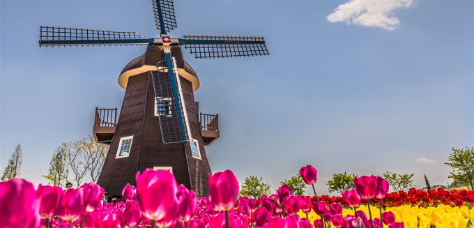 molen-highlights-of-holland